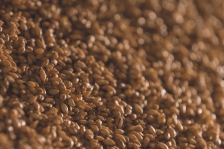 malting grain